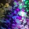 GWセールのご案内と虹色の加茂水族館♪