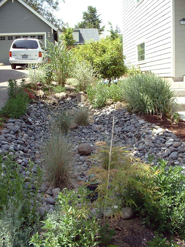 trees and stormwater runoff - center