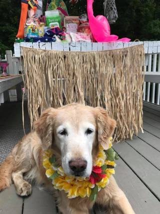 Trooper lying in front of tiki bar with gifts