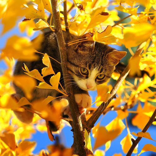 cat-in-autumn