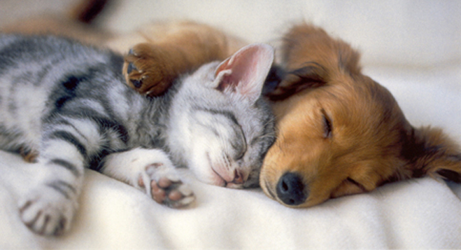 kitten_and_puppy_sleeping