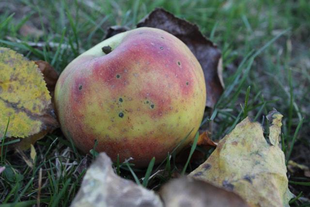 Bucketlist 2017_Apfel im Herbst