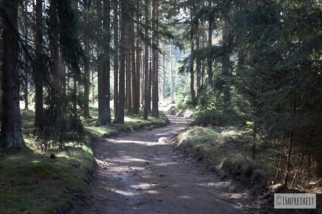 Wanderung auf den höchsten Berg Frankens_Waldweg