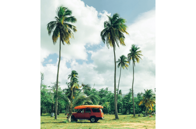 Photo of Palm trees and a red jeep at the beach.