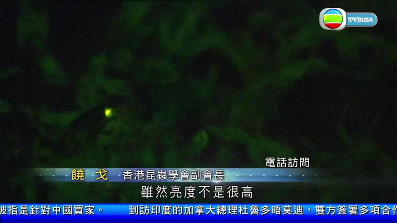 02.23.2018 - 香港發現新品種螢火蟲 以捐肝者鄭凱甄命名 - TVBUSA 官方網站