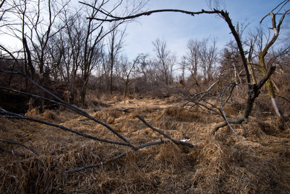 Marshy Area through Downed Tree