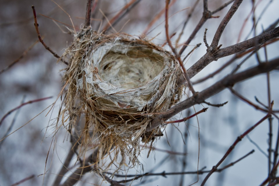 Nest - Second Snow East Branch Draw