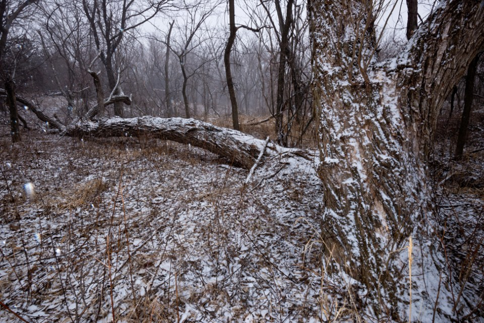 The Fungus Tree - Snow Storm Coming