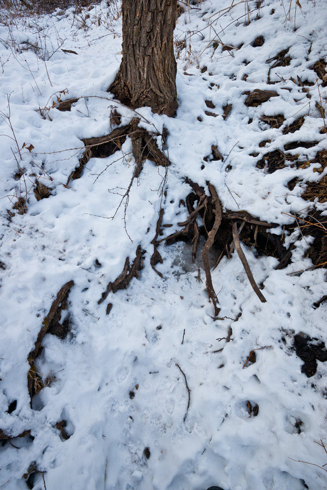 The Seep with Snow and Tracks (V)