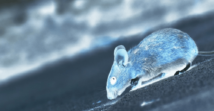 Hantavirus, a New Threat? Man in China Tests Positive and Dies of ...