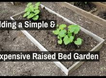 raised bed garden, garden survival, survival garden, food, food storage, growing food, SHTF