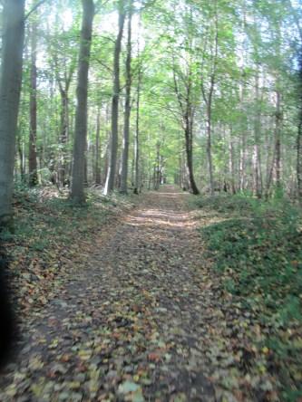 Track through Trones Wood