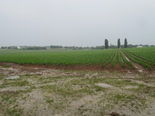 View of Guillemont from advanced assembly trenches in front of Trones Wood. Guillemont Road Cemetery is in the middle ground and the former station strong point was in the position of the grain silo to the left (north) of the image