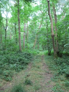 The Central Path in Bernafay Wood - Private Property
