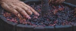 18-59-soiree-vigneronne