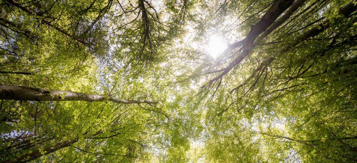 branches-countryside-daylight-environment-566496