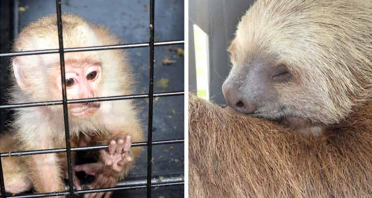 Rescatan animales silvestres en Armenia