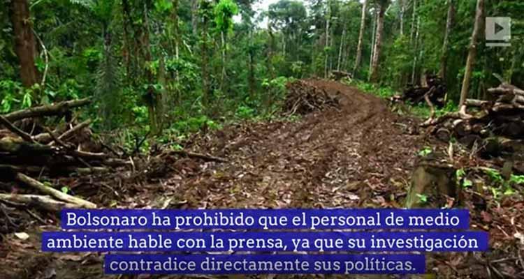 El Amazonas se deforesta un equivalente a una cancha de fútbol por minuto