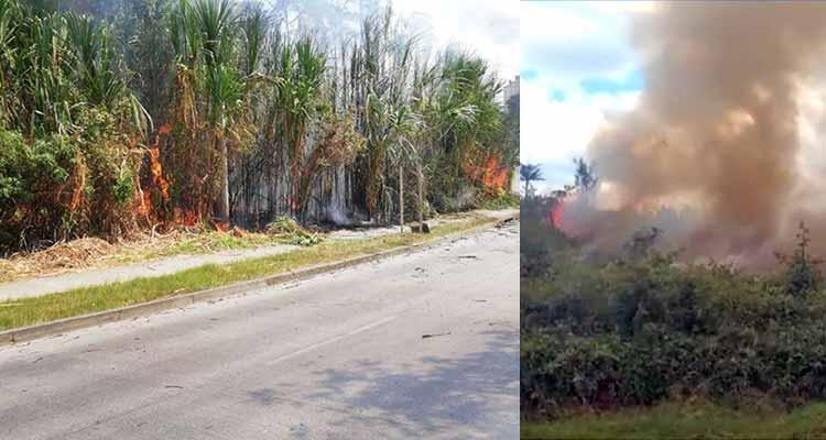 incendios cobertura vegetal Quindío