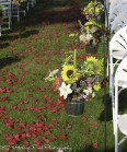 Galvanized buckets with sunflowers and lilies hung on aisle