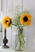 Sunflowers and babies breath in mason jar