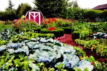 2010-Spring-Oregon-Home-Backyard-Willamette-Valley-Junction-City-Chauncey-Freeman-garden-flowers-vegetables