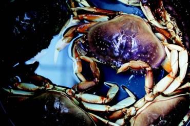 2010-Winter-Oregon-Coast-Bounty-pot-full-of-crabs
