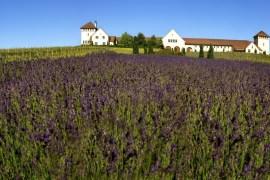 2011-Spring-Oregon-Wine-Travel-King-Estate-Vineyard-drink-taste-sip-grape-vine