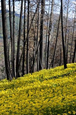 May_June_2015_Wildflowers_Gallery_LeonWerdinger_001