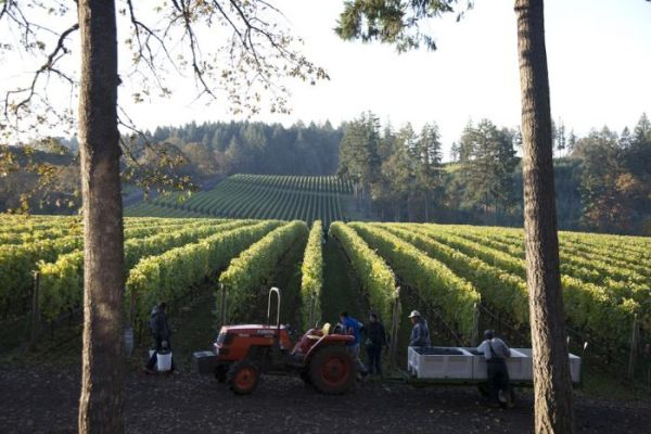 2012-september-october-1859-magazine-willamette-valley-oregon-wine-crush-tractor-grapes-rows