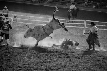 1859-magazine-summer-2012-pendleton-round-up-raina-stinson-rearing-bull-bucked-rider