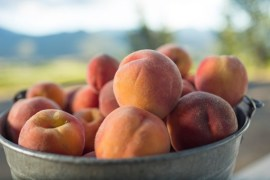 1859_July_August_Jared_Cruce_Valley_View_Peaches_5
