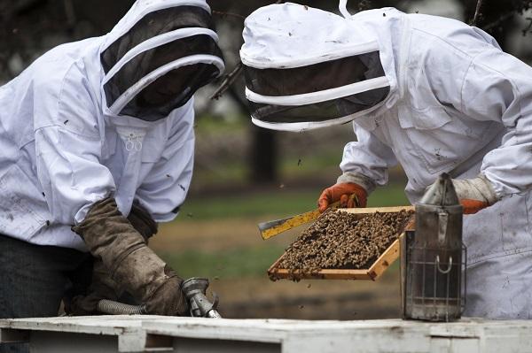 beekeeping, 1859, oregon