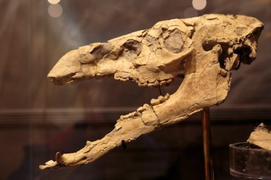 1859_Jan-Feb-2016_John-Day-Fossil-Beds_Ben-Herndon_026