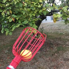 the fruit catcher helps pluck fruit from the tree