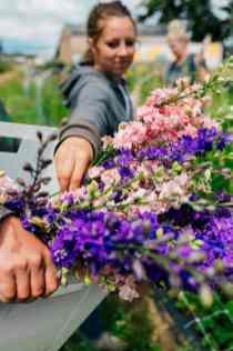 august_september_2018_flower_farm_Katheryn_Moran_Photography_Bellingham_Washington_Triple_wren_farm31