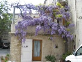 place St Pierre Wisterai