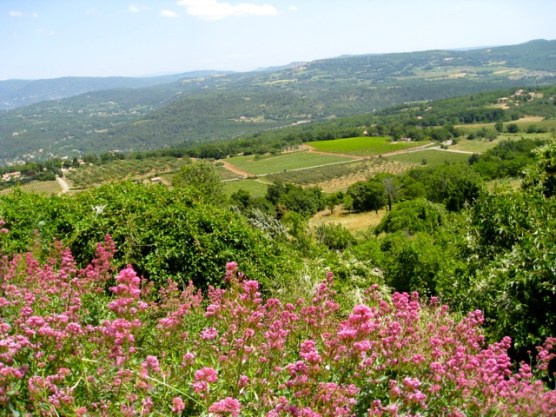 View from belvedere Saignon