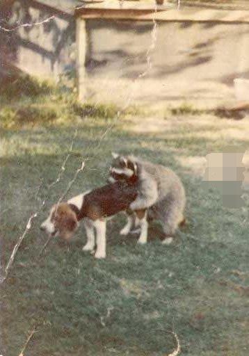 1911hub Worst Hunting Dog Ever