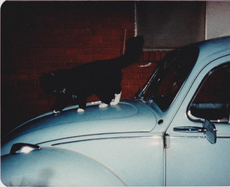 Original Fritz and Woodstock 1983-sm