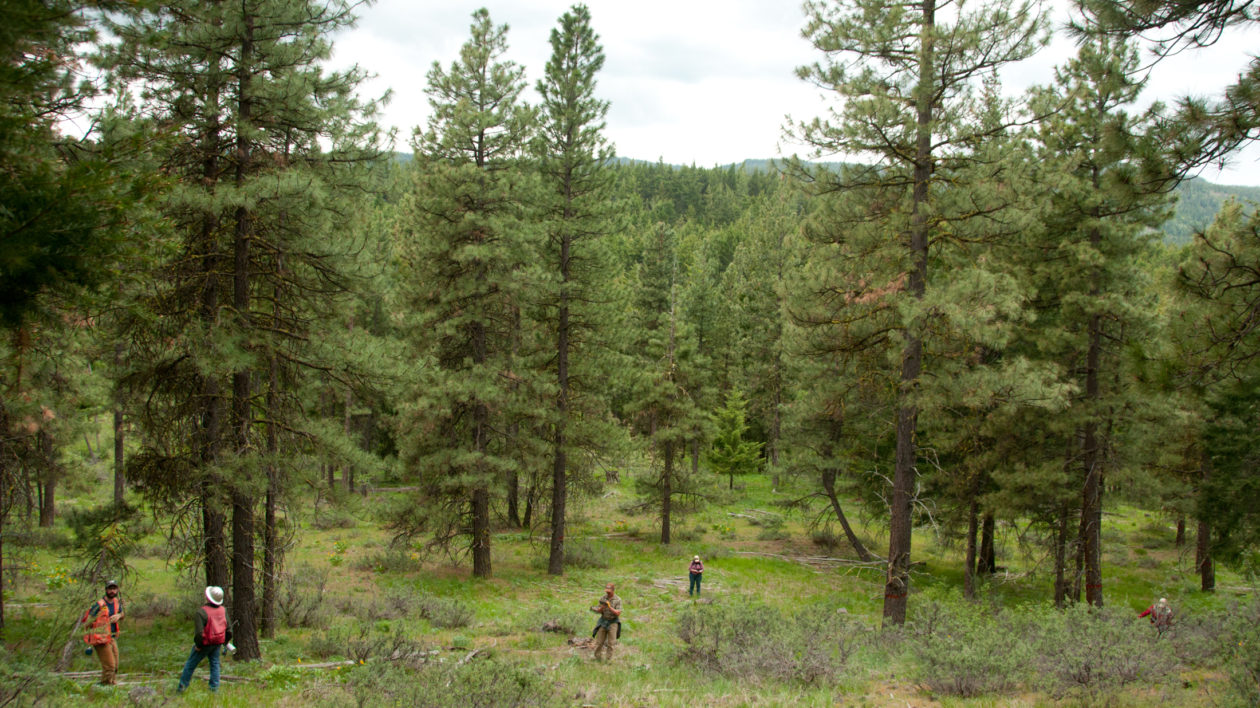 maintaining healthy forests takes