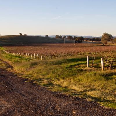 """Hunter Valley <a href=""""http://19onephotography.com/?p=99516"""">Buy Now</a>"""