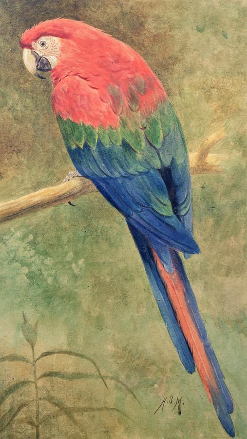 red-and-blue-macaw-henry-stacey-marks