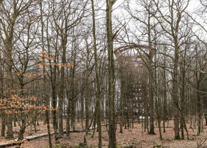 45m Tree observation tower in Denmark