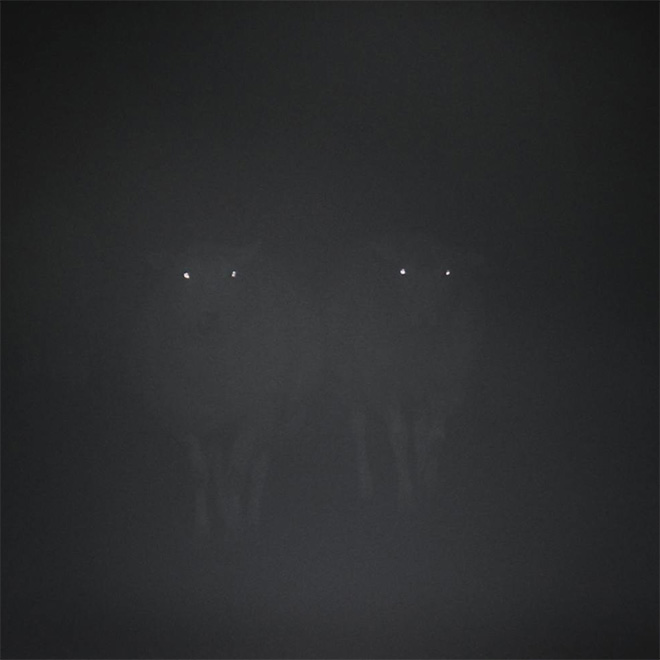 Sheep in the dark fog.