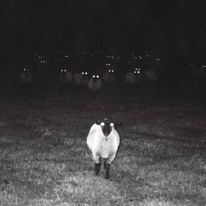 Creepy sheep standing in the dark.