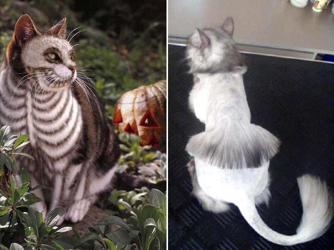 Crazy cat haircuts.