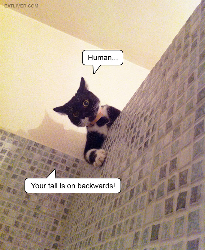 Human... Your tail is on backwards!