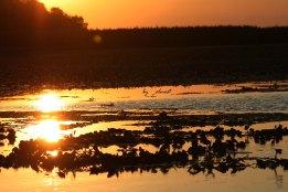 apus de soare in delta