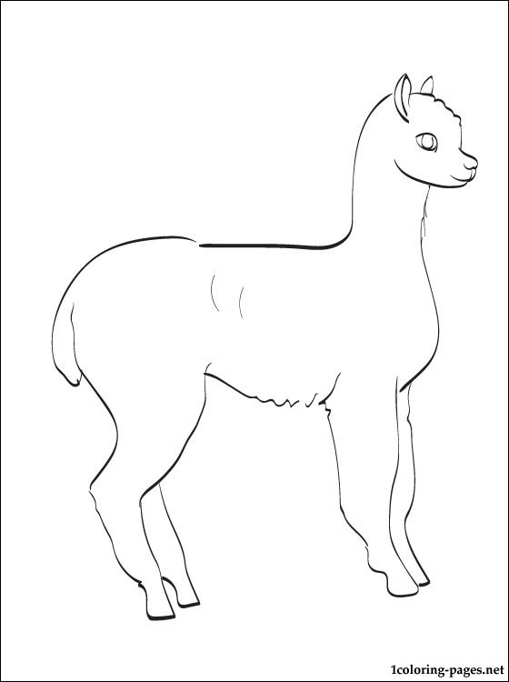 alpaca coloring page  coloring pages